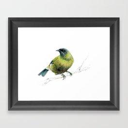 Korimako, the Bellbird Framed Art Print