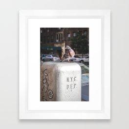 NYC Pigeon Framed Art Print