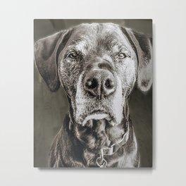 Serious Dog Face Metal Print