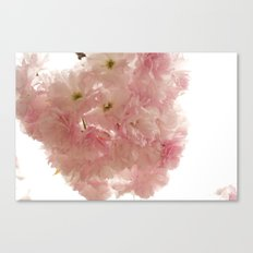 Baby Pink Canvas Print