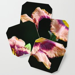 Peachy Keen Lily Coaster