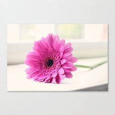 Gerbera on the Windowsill Canvas Print