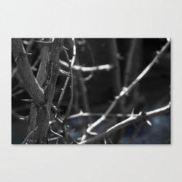 Thorns blue Canvas Print