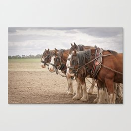 Working Horses Canvas Print