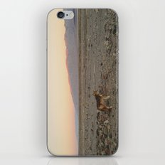 Desert Coyote iPhone & iPod Skin