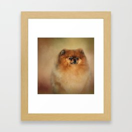 Proud Pomeranian Framed Art Print