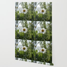 Irish daisy Wallpaper