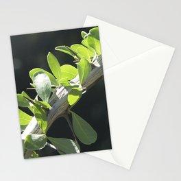 Fine Art Macro Photo of Elegant Ocotillo Branch Stationery Cards