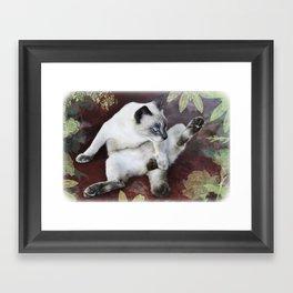 obscene cat Framed Art Print