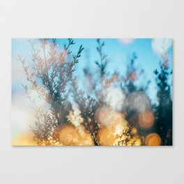 Sunset through the leaves  Canvas Print