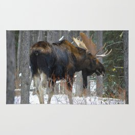 Massive male moose on the loose in Jasper National Park Rug