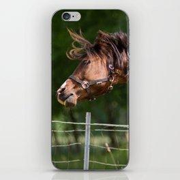 Royal class of horses, an Arabian thoroughbred iPhone Skin