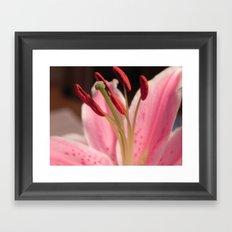 Lily Stem Framed Art Print