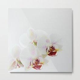 :: orchidea :: Metal Print