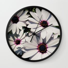 white daises with blue eyes Wall Clock