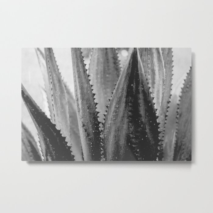 Amazing Agave - Black and White Metal Print