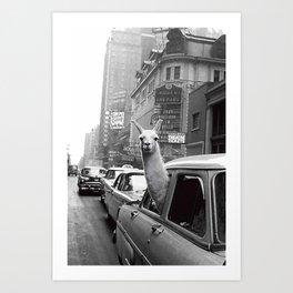 New York Llama Art Print