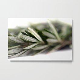 Rosemary Metal Print
