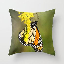 Monarch Butterfly III Throw Pillow