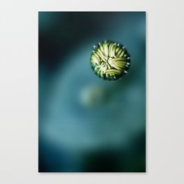 Enclosed Canvas Print