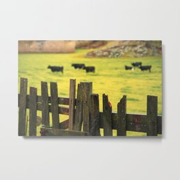Pasture, fence and cows Metal Print