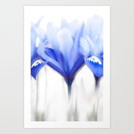 Blue Iris 1 Art Print
