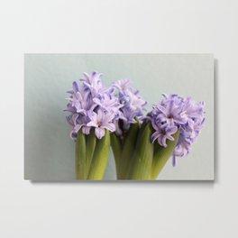 Hyacinths Metal Print