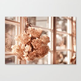 Tethered hydrangea or hortensia Canvas Print