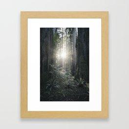 ferns and forest flare Framed Art Print