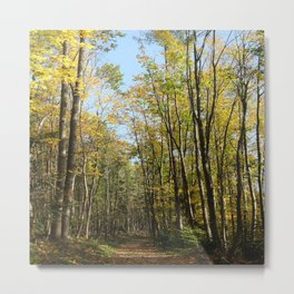 Forest in a Raw Autumn Metal Print