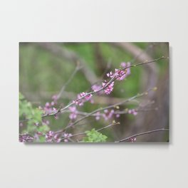 Pink Spring Blossoms Metal Print