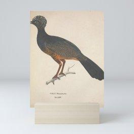 Vintage Illustration - Avium Novae (1825) - Red-billed Curassow Mini Art Print