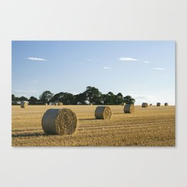 Evening light over round bales of straw in a recently harvested field. Norfolk, UK. Canvas Print