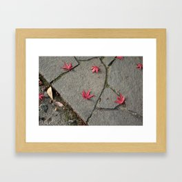 Colorful Japanese Maple Leaves on the Ground In Fall Photography Framed Art Print
