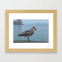 Young Gull Walking Framed Art Print