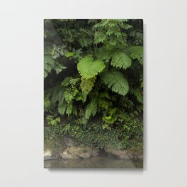 The elegance of life in the huge leaves of the jungles of Sumatra, Indonesia Metal Print