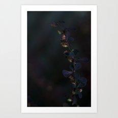 Delicate Darkness Art Print