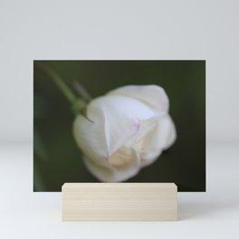 White rosebud Mini Art Print