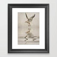 Black-headed gull Framed Art Print