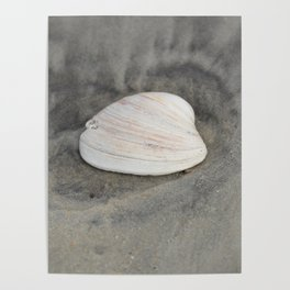 Clam Shell Poster