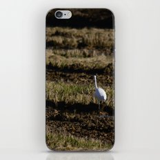 Egret iPhone & iPod Skin