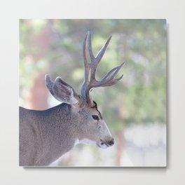Watercolor Deer, Mule 07, RMNP, Colorado, The Bust Metal Print