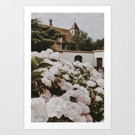 Bruges Flowers   Fine Art Travel Photography Art Print