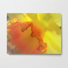 Daffodil Close Up Metal Print