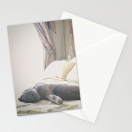 Beautiful gray Scottish Fold cat relaxing on a bed Stationery Cards