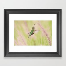 Little Hummer Framed Art Print