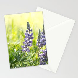 Lupine Light Stationery Cards