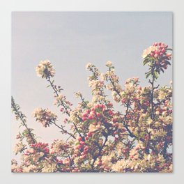 Beautiful Spring Canvas Print