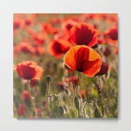 Fiery poppy field - Red Poppies Flowers Metal Print