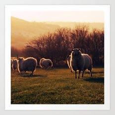Winter sheep Art Print